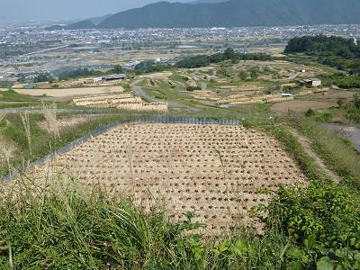 Obasute_02
