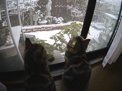 Neko_yuki_01