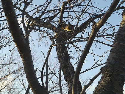 Neko_tree_01