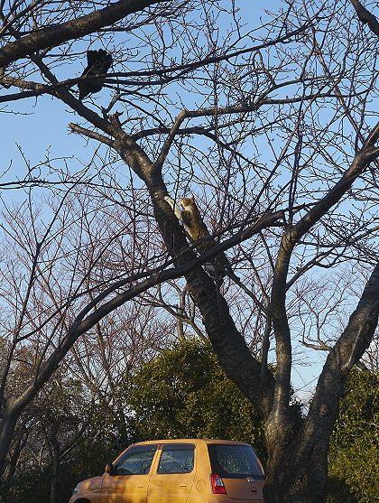Neko_tree_02