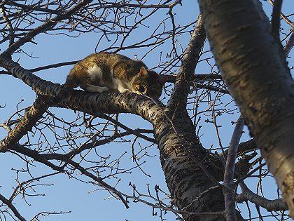 Neko_tree_03