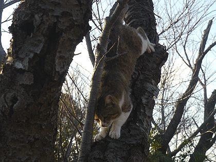Neko_tree_04