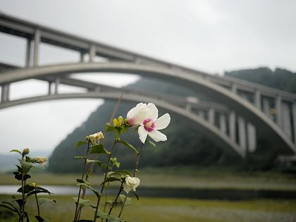 Fujikawa_02