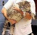 Big_cat
