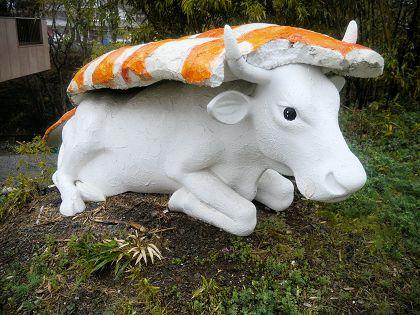 Cow_03