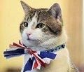 Rally_cat