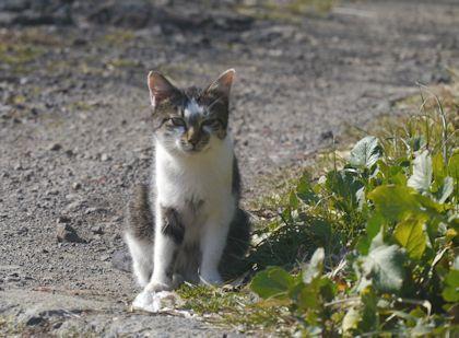 Cat_kamogawa