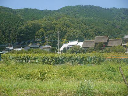 Kamijyo_01